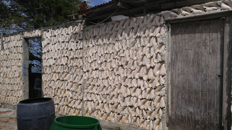 Recycling mal anders . Wand aus Conch-Schalen.